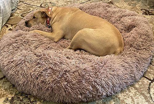 Barbara's dog