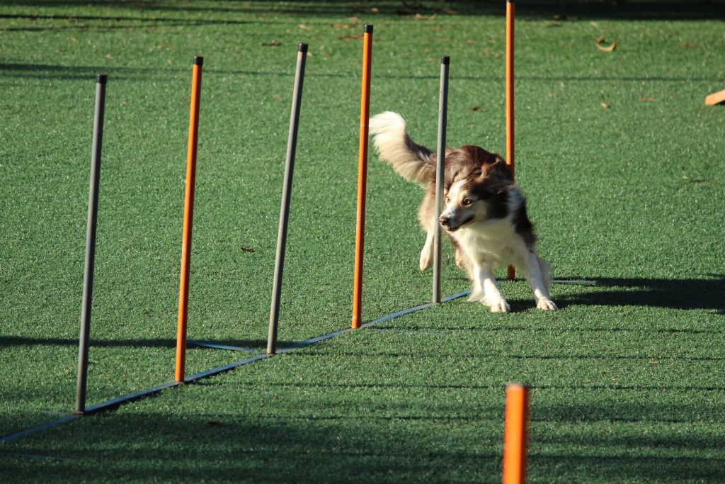 exercise can help relieve your dogs anxiety